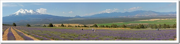 110710_mt_shasta_lavender_farm_pano