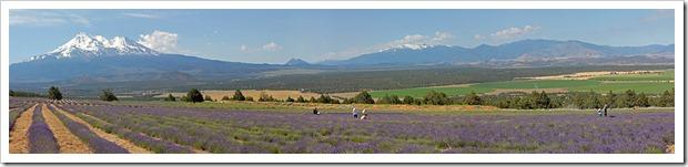 110710_mt_shasta_lavender_farm_pano