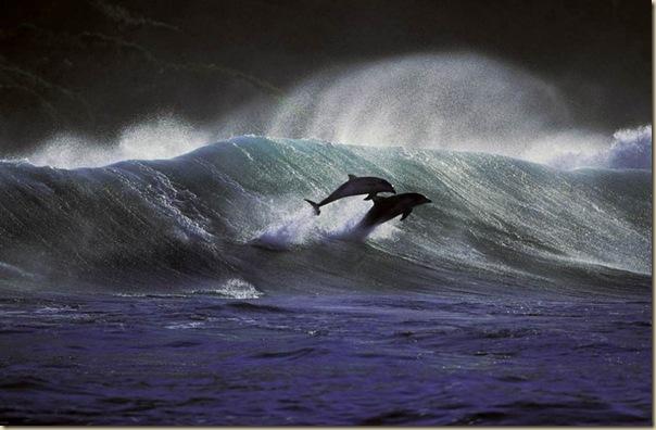Danse avec les dauphins (5)