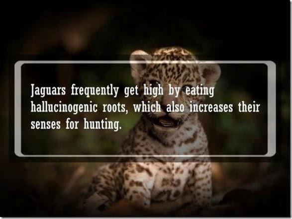 interesting-animal-facts-005