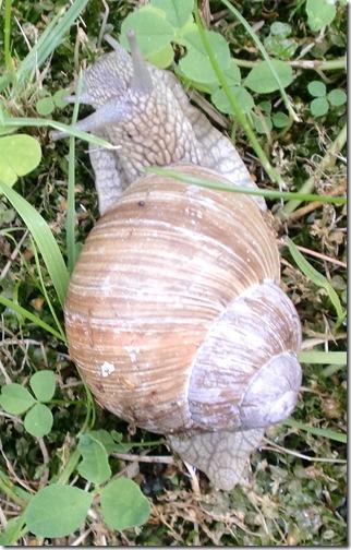 Augusti-sept-2012 243