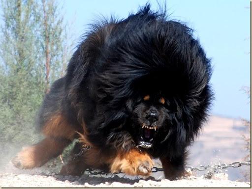 Sehr Le chien le plus cher du monde | 1 Tour d'Horizon HB16
