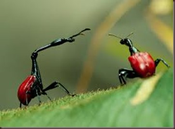 Amazing Pictures of Animals, photo, Nature, exotic, funny, incredibel, Zoo, Giraffe weevil, Insecta, Alex (22)