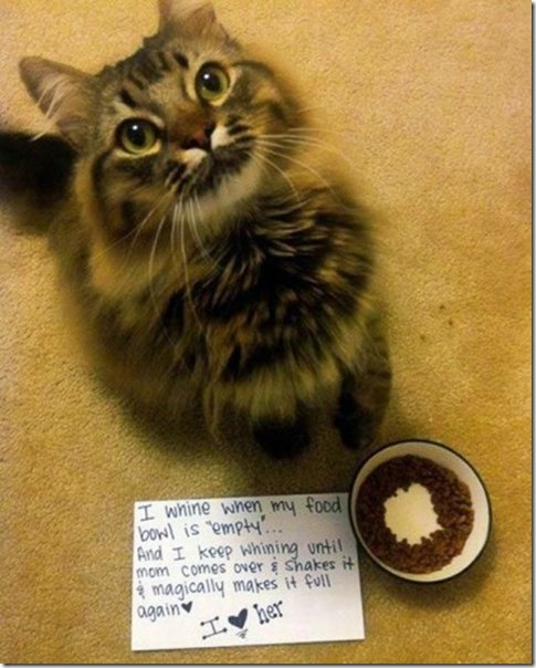funny-animals-cute-26
