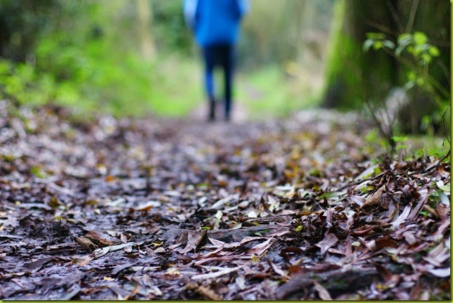 muddy walk in autumn