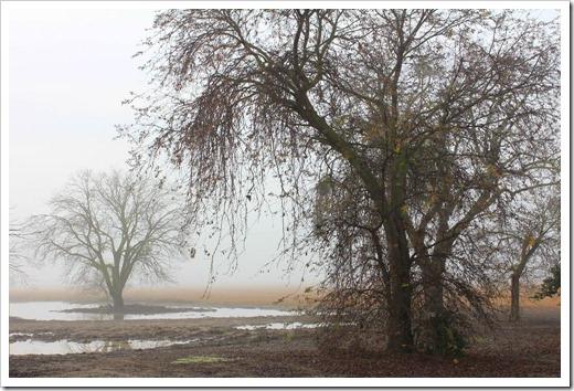 130109_trees_1