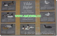 DSC07718.JPG Skylt med Vilda fåglar som BESÖKER Skansens dammar. Med amorism