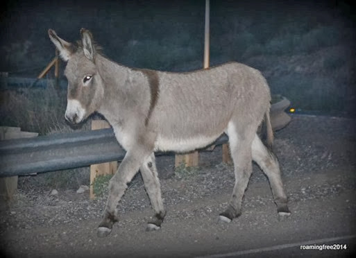 Burro in the road
