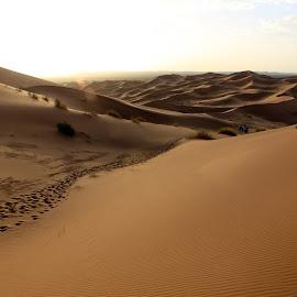 by Ricky Papex - Landscapes Deserts ( path, nature, landscape )
