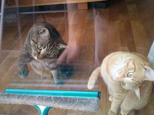 [写真]いっしょに大掃除をする猫たち