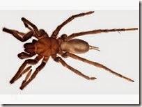 blind spider