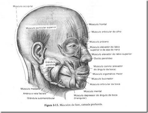 acupuntura estética curitiba rugas 5