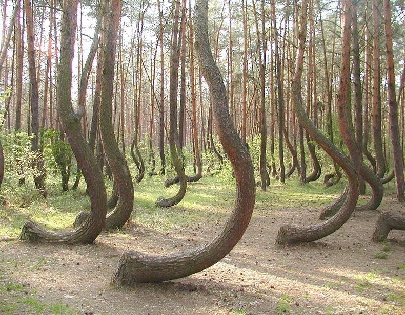 crooked-forest-5