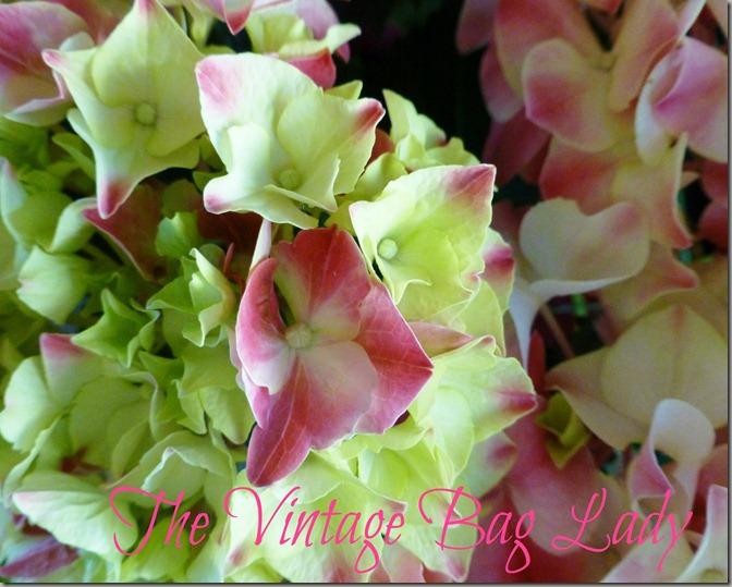 flowers 019