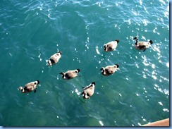 7789 Ontario  - Sault Ste Marie - Canada Geese