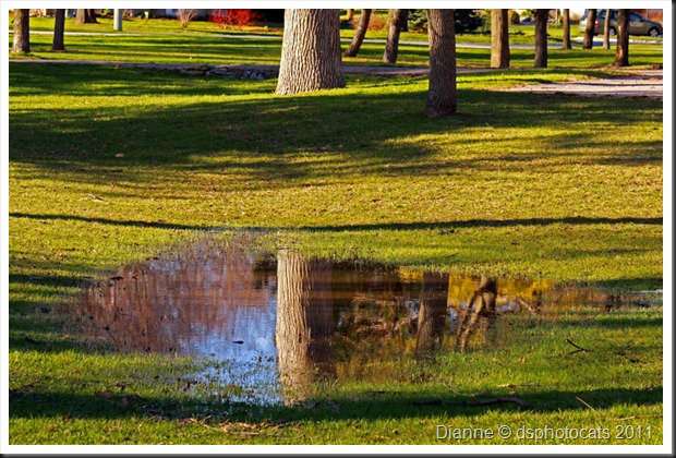 IMG_9672 Reflections In The Park 8x12