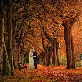 Autumn Kisses by Alan Evans - Wedding Bride & Groom ( wedding photography, melbourne wedding photographer, autumn, wedding day, wedding, autumn wedding, aj photography, trees, autumn colours, falling leaves,  )