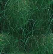 grass-dark