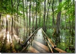 Cypress Swamp, Natchez Trace Parkway