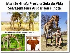 Mamãe Girafa Procura Guia de Vida Selvagem Para
