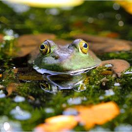 by Dennis Ba - Animals Amphibians