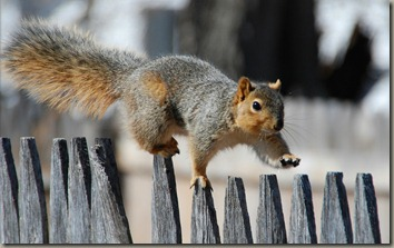 animal-photography-funny-squirrels