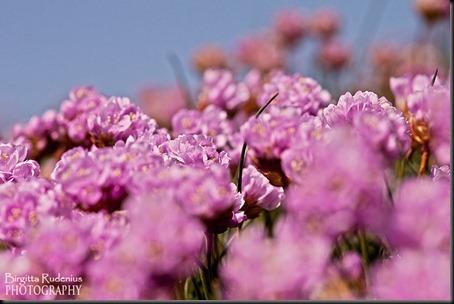 blom_20120505_trift