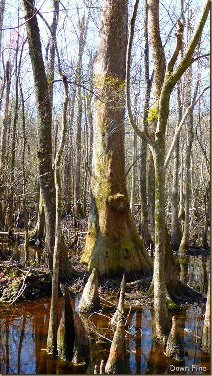 Beidler Forest_056 - Copy