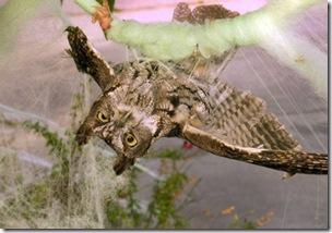 Coruja é resgatada após ficar presa em decoração de Halloween