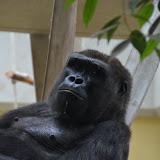 Heidelberger-Zoo_2012-04-09_815.JPG