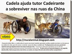 Cadela ajuda tutor Cadeirante_thumb[3]