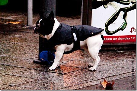 dog_20121202_cold