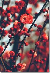 flores vermelhas 03