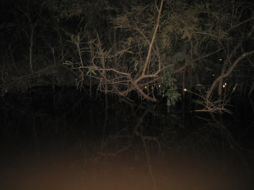 The small dots of caiman eyes reflecting in the dark.