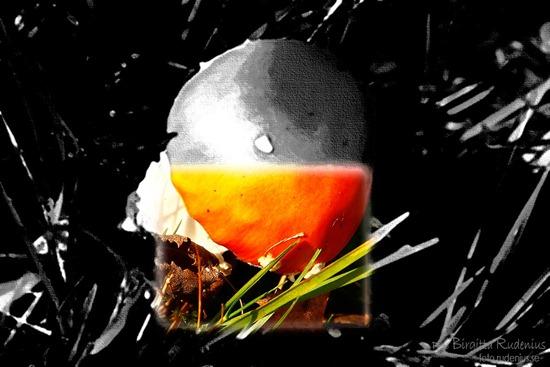 pm_20111023_svamp