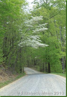 Trees along path