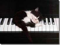 gato pianista blogdeimagenes (1)