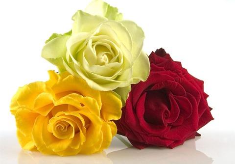 roses11h