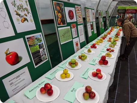 A visitor inspects some of the apples