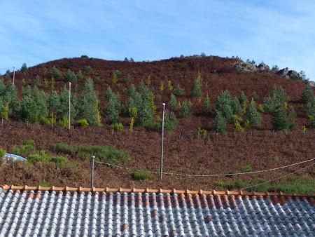 Varf de munte in Madeira