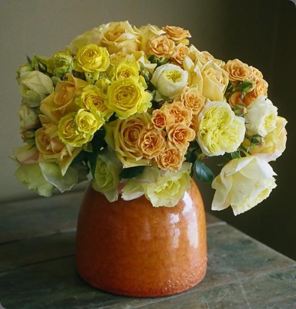 just roses 00070011 cebolla