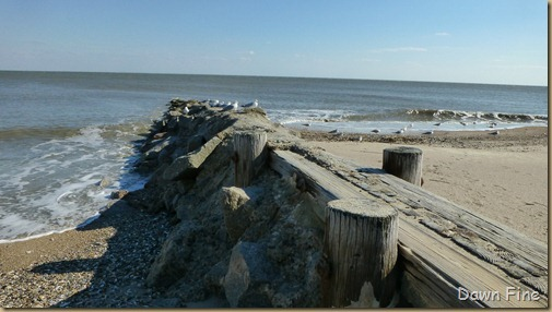Edisto Beach State Park day 2_037