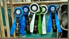 shaggy show ribbons