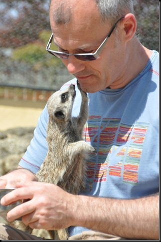 Man and Meerkat touching face