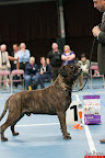 20130510-Bullmastiff-Worldcup-0992.jpg