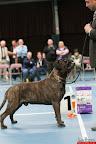 20130510-Bullmastiff-Worldcup-0992.jpg