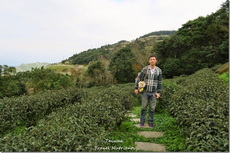 三峽熊空茶園 (32)