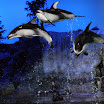 Chicago IL - Shedd Aquarium