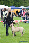 20100513-Bullmastiff-Clubmatch_30896.jpg