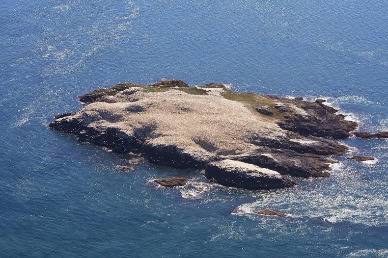 grassholm-island-12